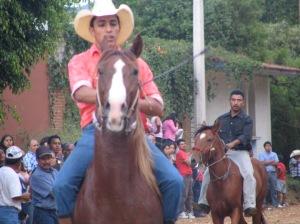 Handsome caballos!