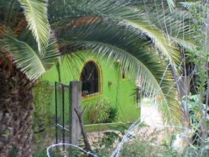 Lime green house in Oaxaca