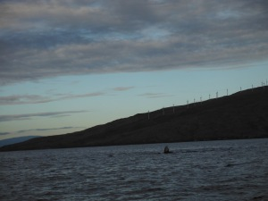 A pectorial fin  - with the windmill farm on the West Maui Mountains in the background.*