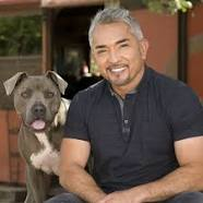 Cesar Millan The Dog Whisperer http://www.cesarsway.com/dogbehavior/biting/When-Dogs-Attack