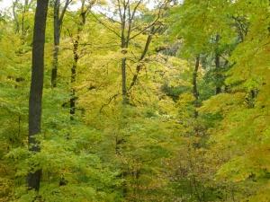 sfeffigymoundforestw