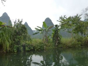 Bananas and orchid trees along the banks of the Yulong.