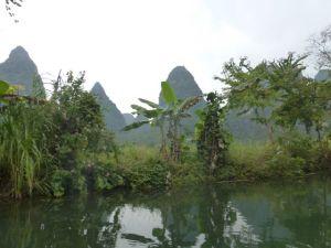 Bananas and orchid trees along the banks of the Yulong.
