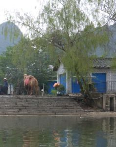 A camel and two monkeys waited on the bank for photo opportunities.