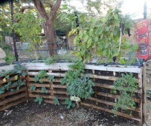 Experimental water garden.