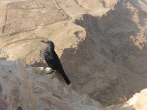 A Roman camp site marked off below the Masada plateau.