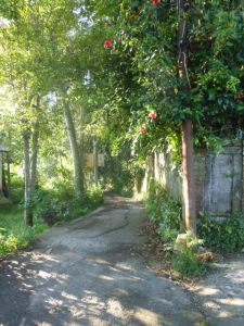 A shaded walk.