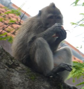 You'll see them especial in Monkey Forest