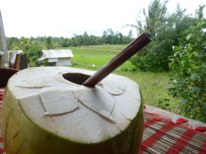 A stop at Sari Organic for a coconut treat (note the straw is of sustainable coconut too).