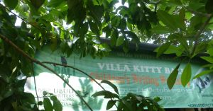 After Chris rescued a kitten, we went to Villa Kitty, an animal shelter just outside Ubud