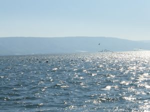 The magnificent Sea of Galilee with commorants xx flying above.