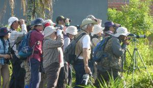 Bird watchers on Jalan Bisma