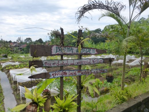 A new organic garden is at the end of Jalan Bisma!