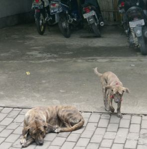 The Bali Dog - comes in many colors.  It may be the oldest breed on Earth