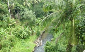Bali - green and lush