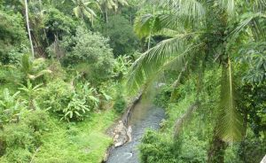 Bali - green and lush