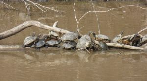 Outside - lots of turtles