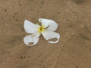One flower remained on the shore