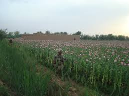 U.S. Marines on patrol next to a poppy field in 2010. Image from