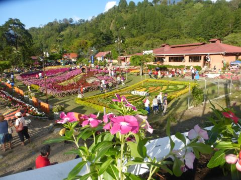 fair - flowers