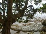 Bocas shore