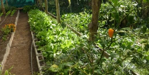 SL greenhouse