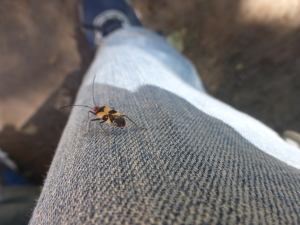 colorful bug - on my leg