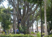Working with silks in the trees of a San José park