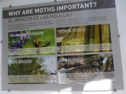 Moths and butterflies are very similar