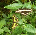 Beautiful butterflies everywhere
