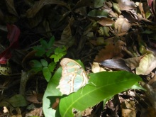 Butterflies, of course, in the Ecological Sanctuary