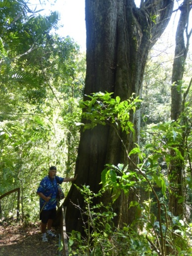 Second growth forest - but big