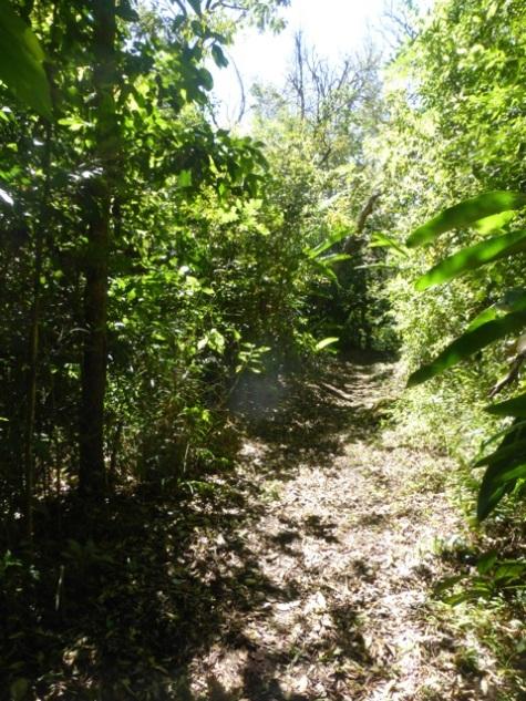 Inviting trails