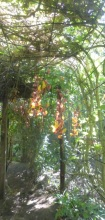 Flowering vine covered walkway to the hammocks