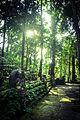80px-monkeyforest