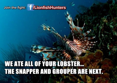 Hunting-Lionfish